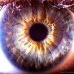 人の眼球は神秘的?
