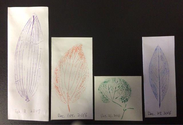 葉拓で植物の葉の構造を学ぶ