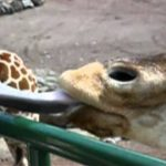 天王寺動物園で消化の大切さについて学ぶ
