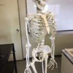 国立科学博物館のレンタル骨格標本