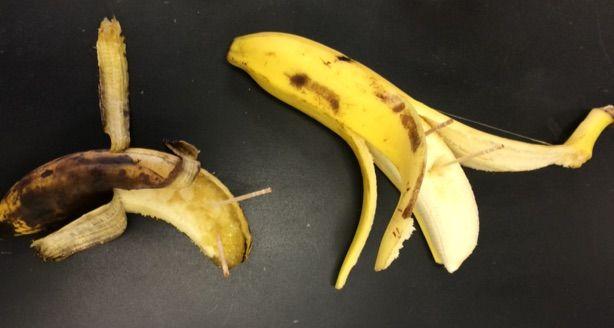 バナナでヨウ素デンプン反応を観察する