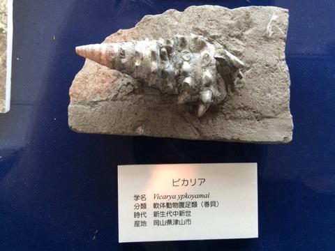 東海大学自然史博物館②