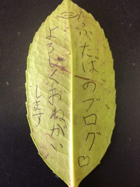 タラヨウの葉の実験