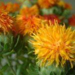 紅花の色素で染色(酸・アルカリで染める)
