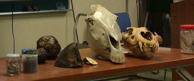天王寺動物園で骨格について学ぶ①