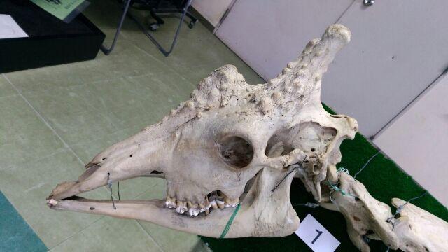 天王寺動物園で骨格について学ぶ④