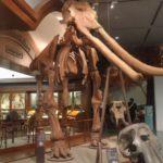琵琶湖博物館に行ってきました 「琵琶湖のおいたち」「人と琵琶湖の歴史」編