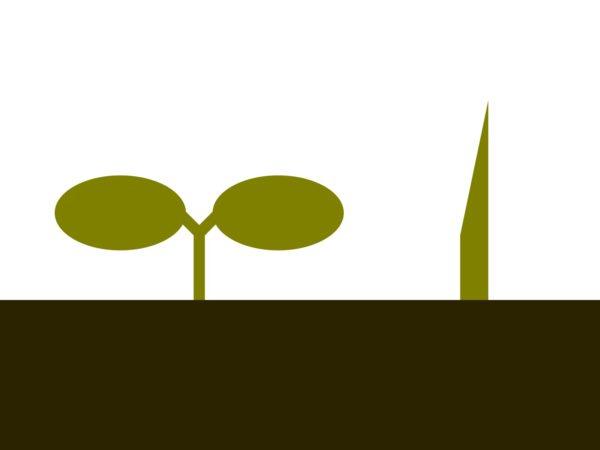双子葉類と単子葉類