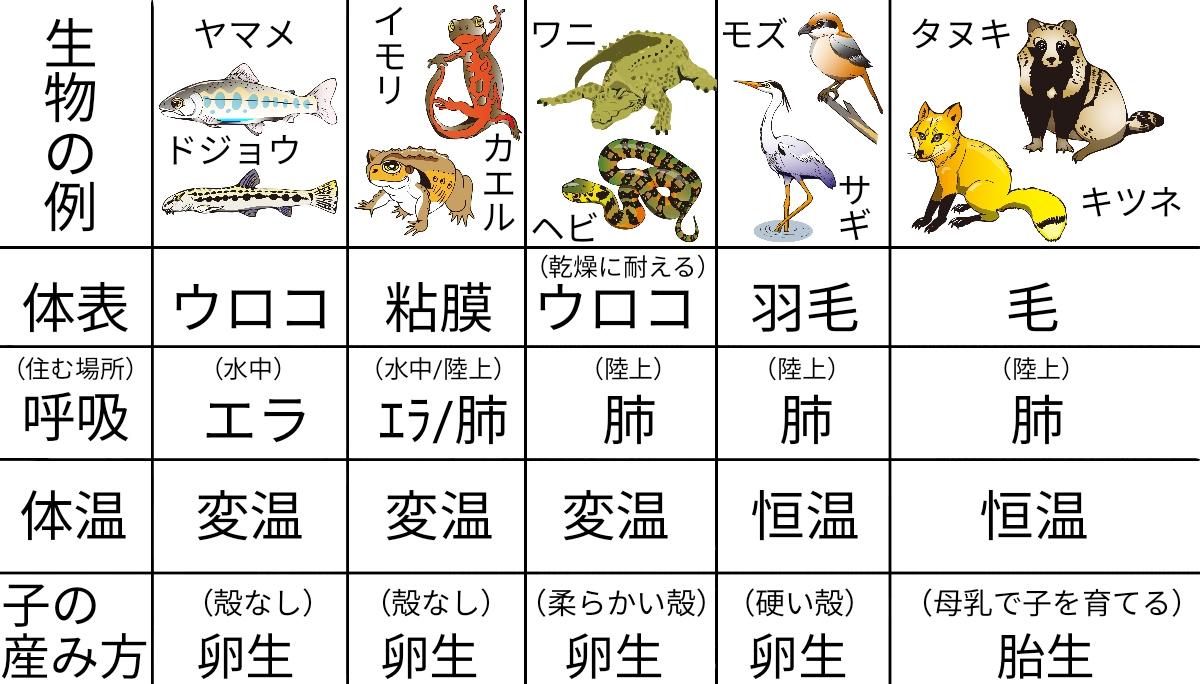 脊椎動物の分類