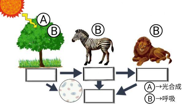 食物連鎖と物質の循環