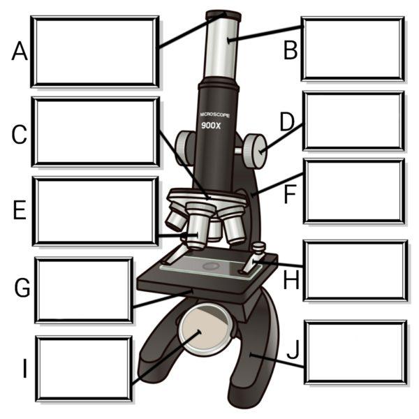 顕微鏡とルーペ
