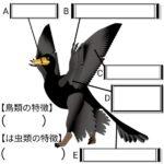 始祖鳥(進化の証拠)