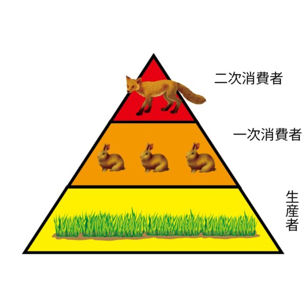 生態系ピラミッド