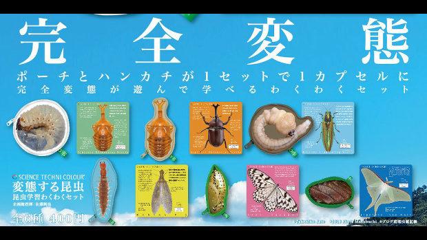 科学がちゃ、変態する昆虫「完全変態」が小学校の授業で使えるかも