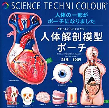 科学がちゃ「本気で作った人体解剖模型ポーチ」が面白い!