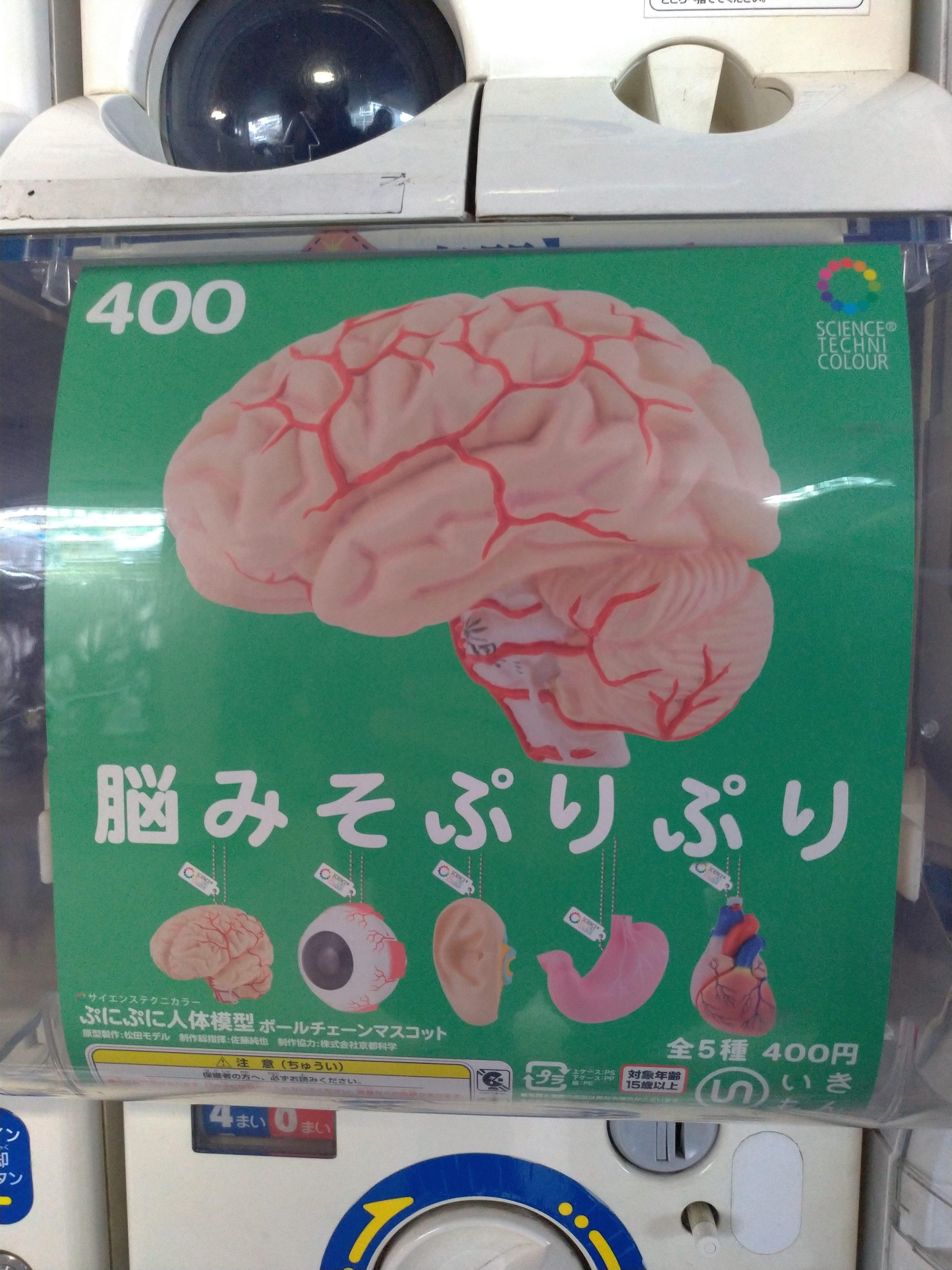サイエンステクニカラーの科学ガチャ「ぷにぷに人体模型」脳みそぷりぷり