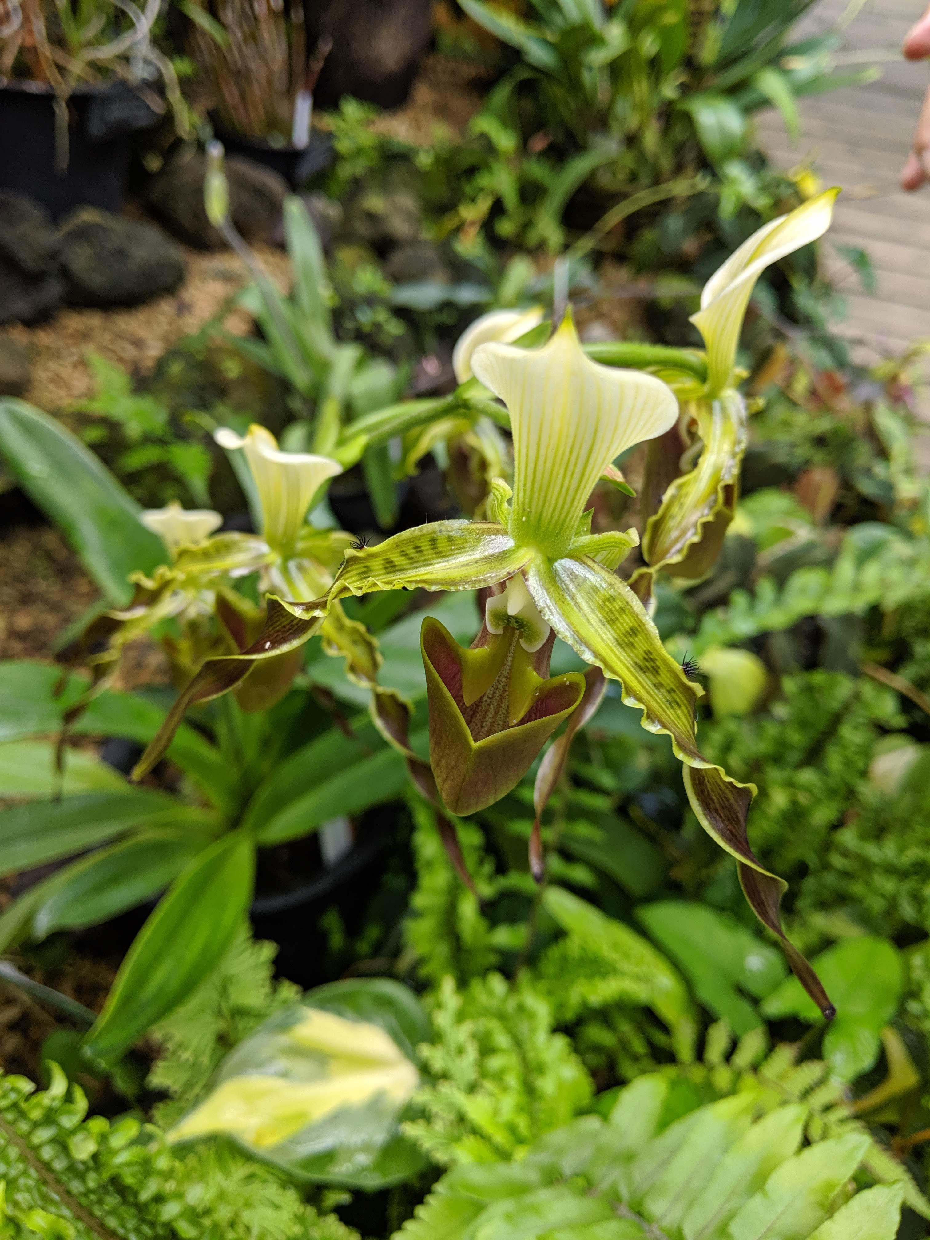 大阪市立咲くやこの花館(植物園)に行ってきました2食虫植物展編