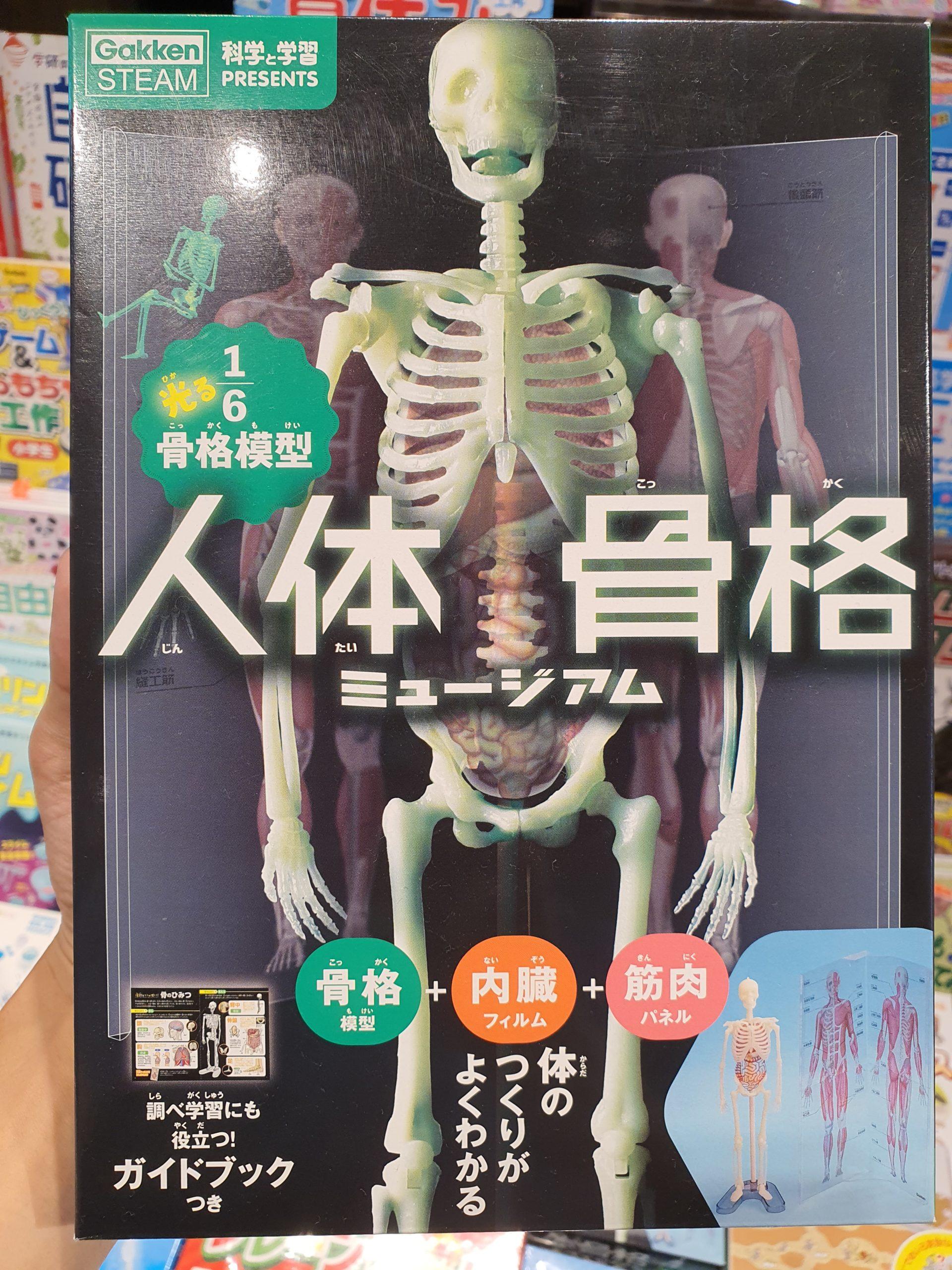 学研の「人体骨格ミュージアム」が楽しそう🦴