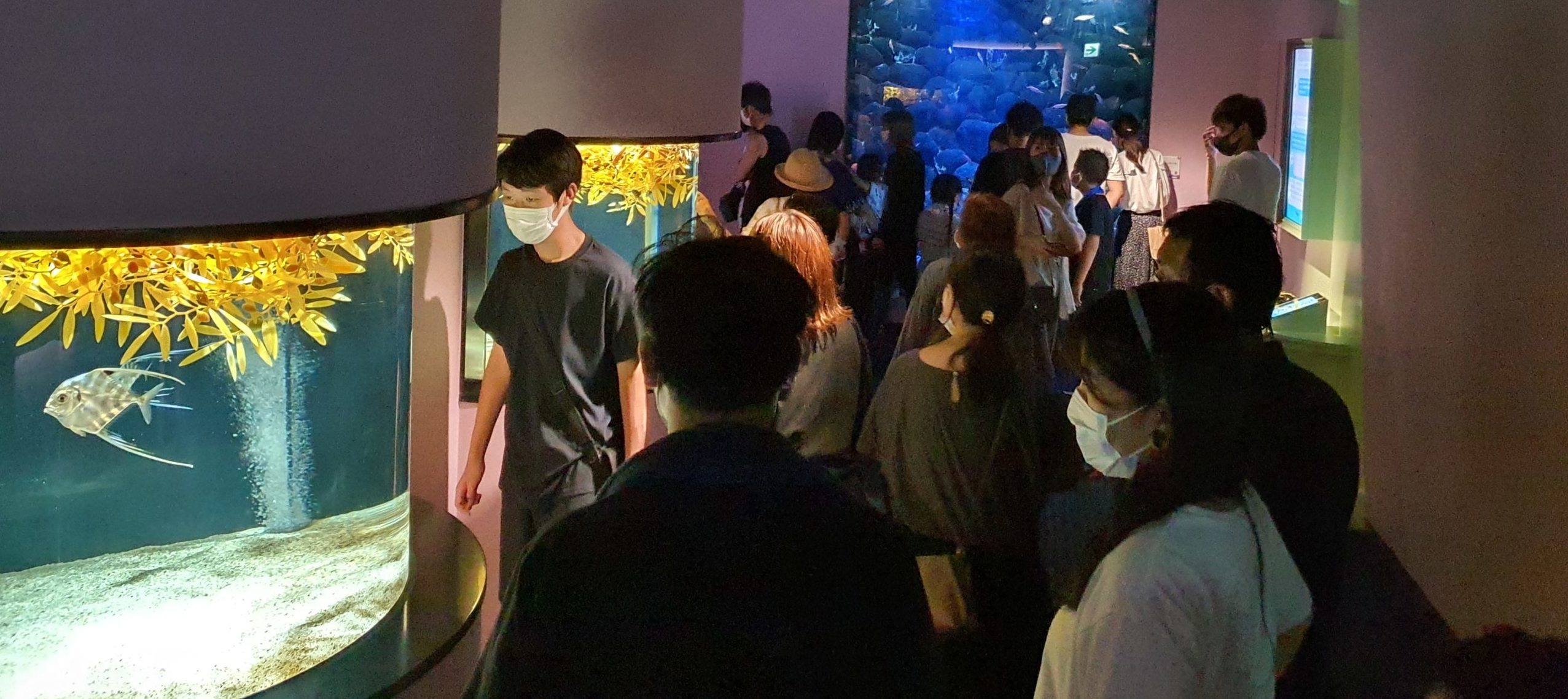 四国水族館に行ってきました③