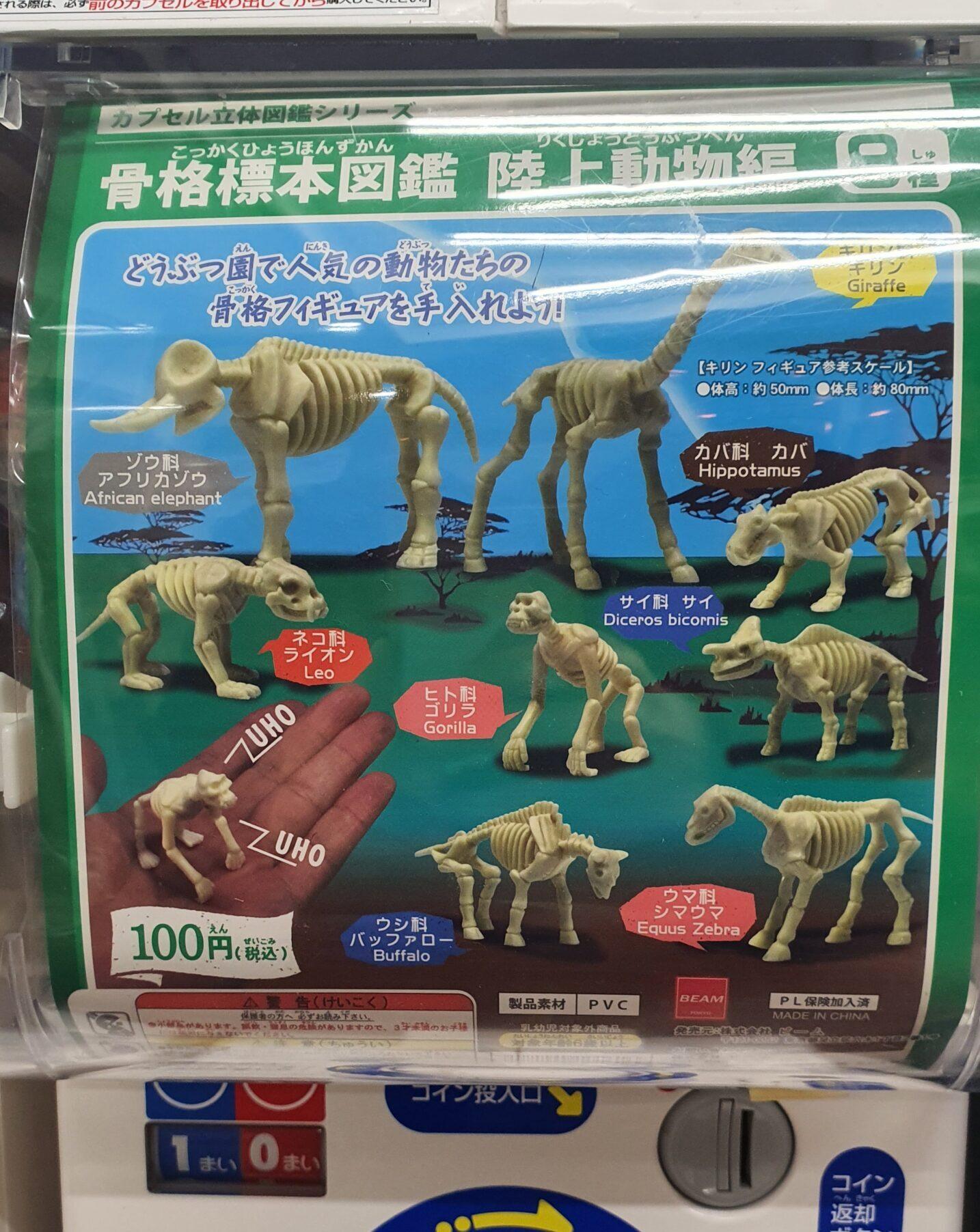 科学がちゃ「骨格標本図鑑陸上動物編」と「フラワーファイバーライト」
