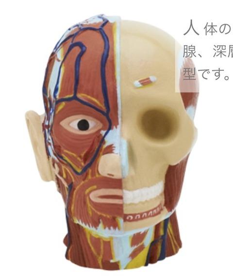 科学ガチャ④「人体模型ストラップ1」「大人の科学 世界の発明品コレクション」