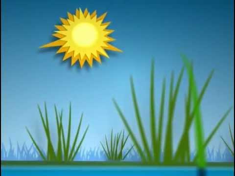 植物で発電?未来の発電所は水田かも•••。