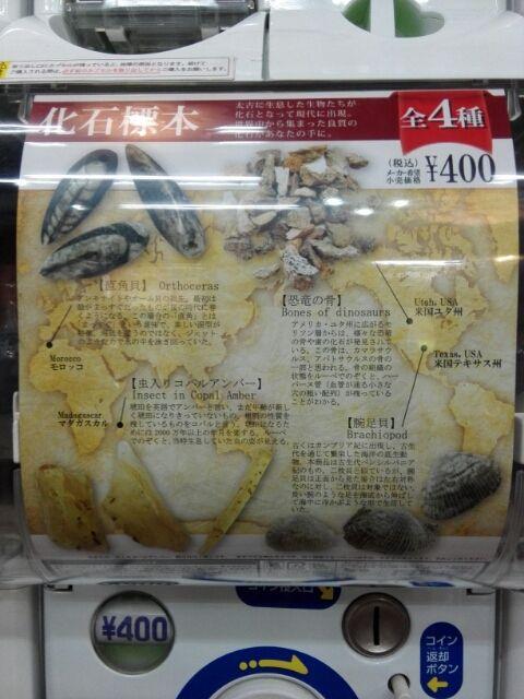 科学ガチャ15「化石標本」
