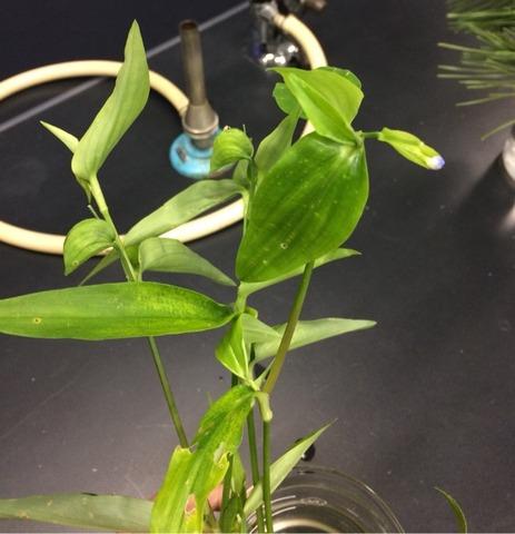 様々な植物の気孔の観察