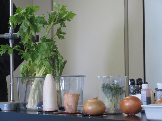 様々な植物の道管の観察