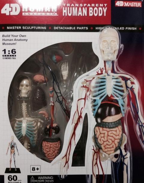 ミニチュア人体模型