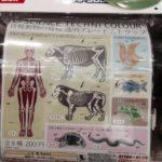 科学ガチャ③「脊椎動物の骨格 透明ストラップ」