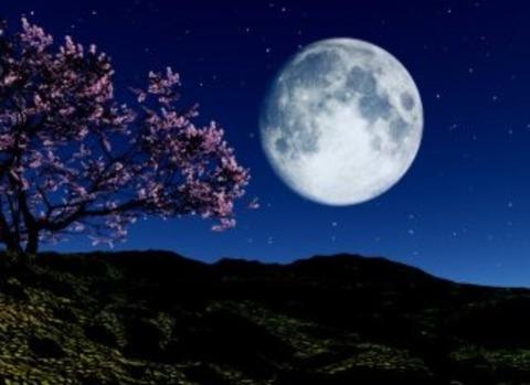 4月4日はお花見&皆既月食で決まり!