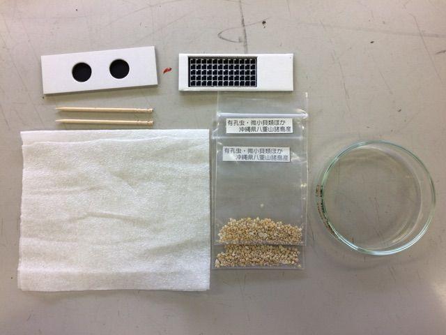 有孔虫の観察実験