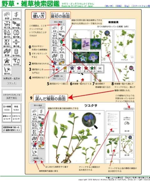 千葉県立中央博物館の野草・雑草検索図鑑が凄い