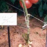 面白植物1