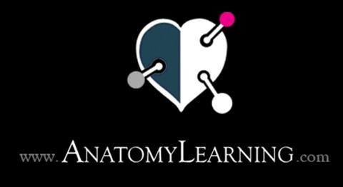 授業で使えるアプリ25「anatomy learning」